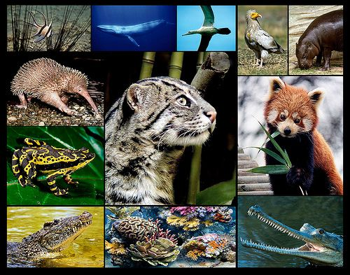 endangered species research instructions to authors