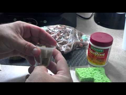 aerogarden seed starting system instructions
